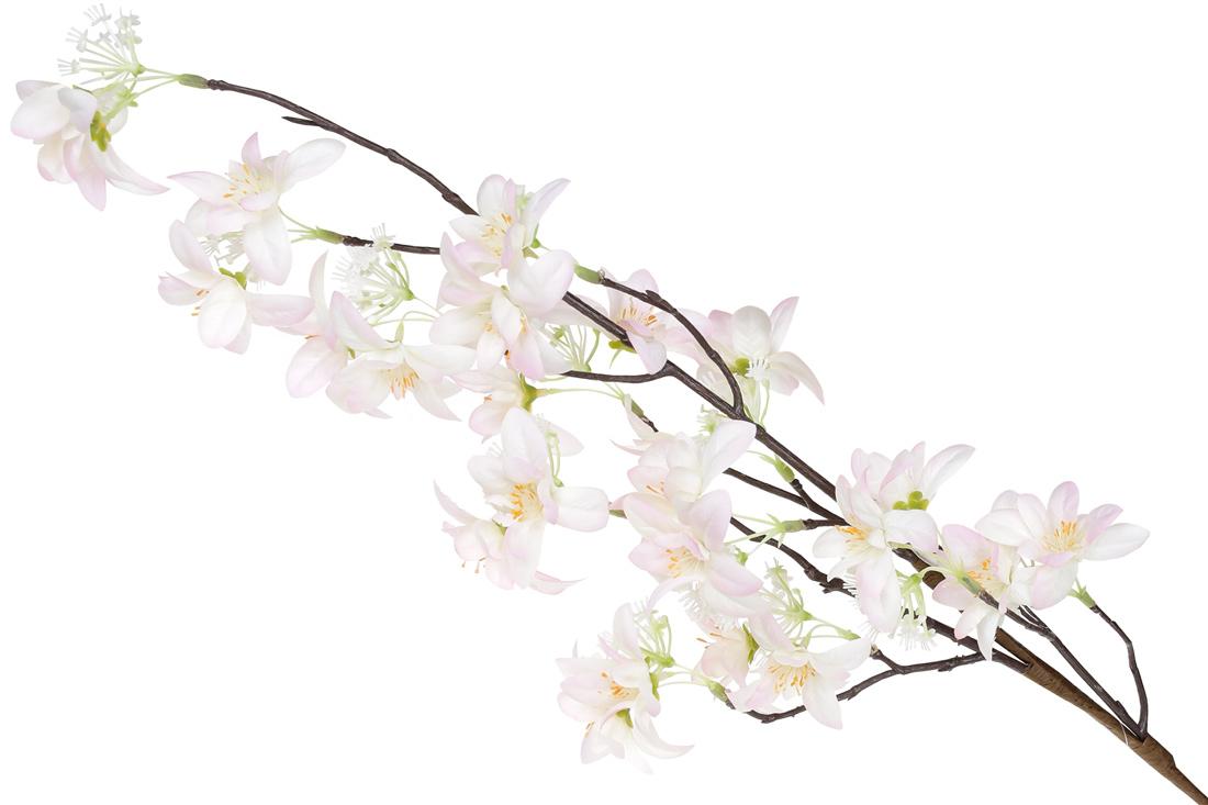 Декоративная ветвь